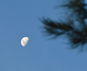 Moon over Deua