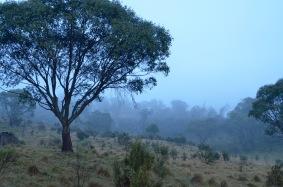 Morning fog in Kozzie