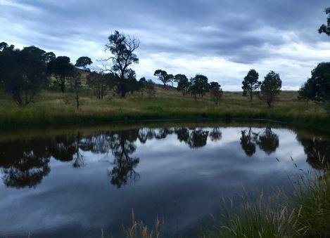 A little billabong full of frogs. Cooleman Ridge