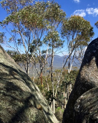 Bushwalk in Namadgi to Boboyan Trig