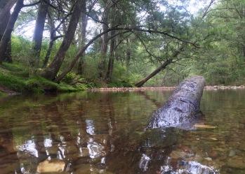 Deua River, Bendethera Valley